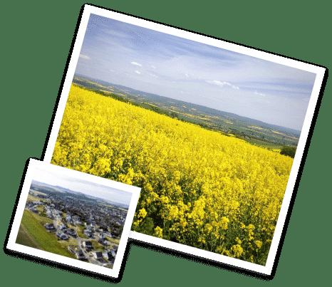 Eine Collage von Bildern. Ein weitläufiges Rapsfeld und eine Luftaufnahme der Ortsgemeinde Ochtendung