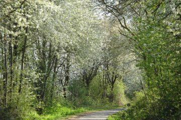 Fahrradweg durch den Wald Ochtendung