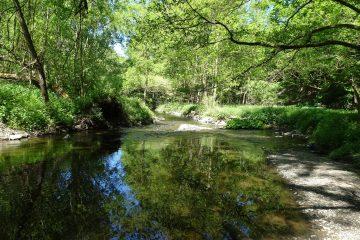 Ochtendung Wald mit Gewässer